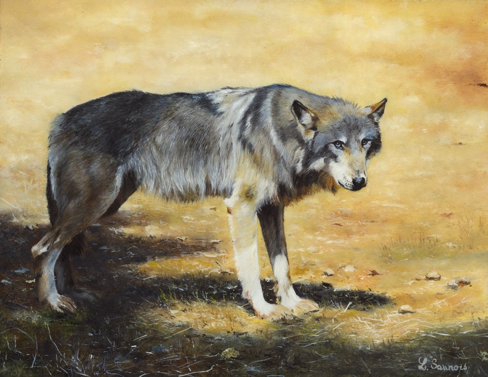 Wolf, painting by Laurence Saunois, wildlife artist