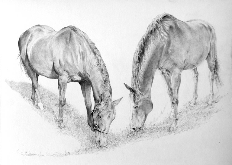 Drawing of horses by Laurence Saunois, animal artist
