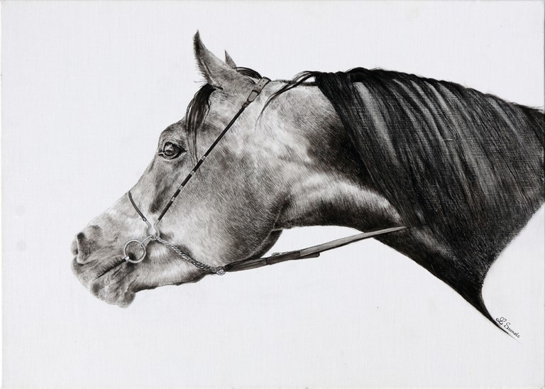 Drawing of horse by Laurence Saunois, animal artist